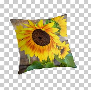 Cushion PNG