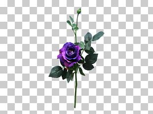 Rose Cut Flowers Purple Flower Bouquet Floral Design PNG