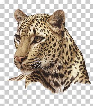 Lion Felidae Cheetah Cat PNG