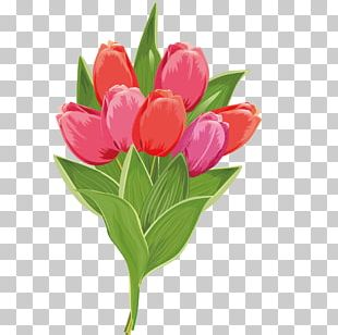 Tulip Stock Photography Pink Flower PNG