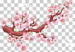 Cherry Blossom Bird Flower PNG