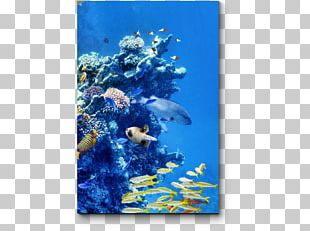 Coral Reef Fish Underwater Great Barrier Reef PNG