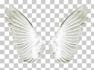 Aile Angel PNG