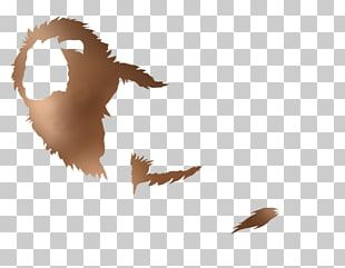 Goose Duck Beak Bird Mallard PNG