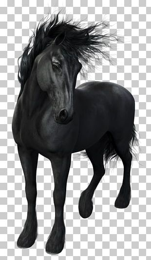 Friesian Horse Stallion Arabian Horse Mustang Mare PNG