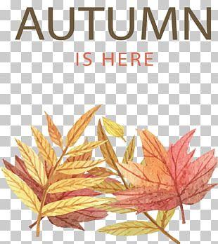 Autumn Leaf Color Illustration PNG