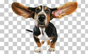 Basset Hound Beagle Bloodhound Papillon Dog Chihuahua PNG