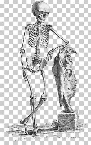 Surgery Anatomy Medicine Bone Human Skeleton PNG