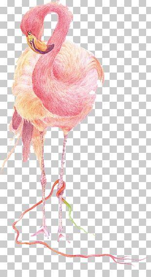 Flamingos Bird IPhone 7 IPad IPhone 8 PNG