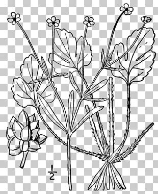 Twig Cut Flowers Floral Design Leaf Plant Stem PNG