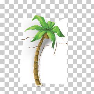 Coconut Tree Arecaceae Illustration PNG