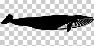 Marine Mammal Sperm Whale Blue Whale Cetacea Sea PNG
