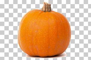 Jack-o-lantern Pumpkin Calabaza Butternut Squash Cucurbita PNG