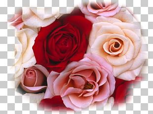 Rose Flower Bouquet Red White PNG