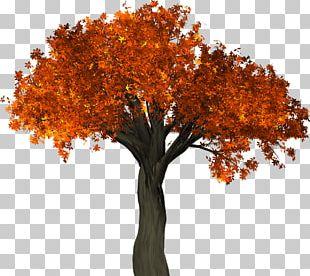 Tree Autumn Leaf Color Trunk PNG