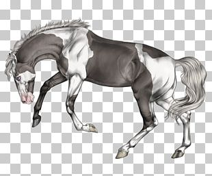 Mane Stallion Mustang Halter Mare PNG