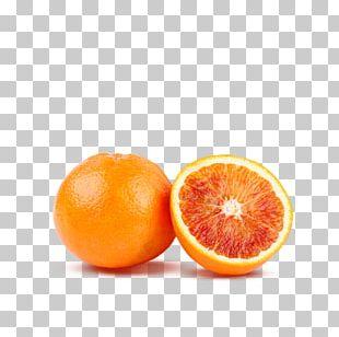 Blood Orange Tangerine Tangelo Mandarin Orange Clementine PNG