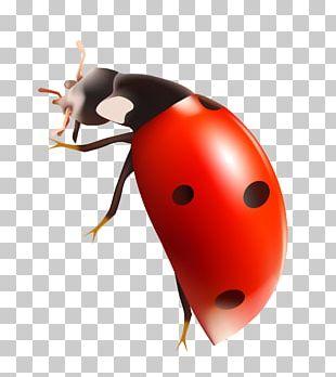 Ladybird PNG