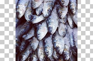 Sardine Kipper Tinapa Fish Products Oily Fish PNG