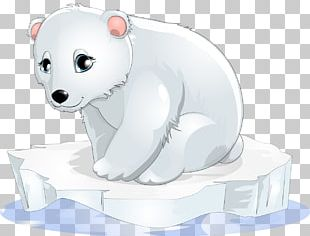 Baby Polar Bear PNG