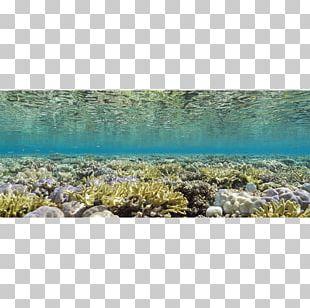 Seascape Underwater Natural Light Glen Cowans PNG