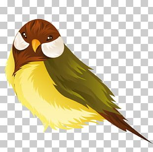 Lovebird Parrot Domestic Canary PNG