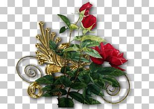 Rose Family Cut Flowers Floral Design PNG