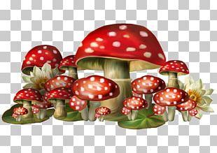 Mushroom Amanita Muscaria PNG