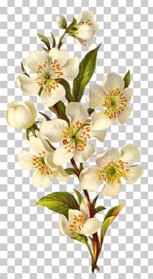 Flower Vintage Clothing Floral Design PNG