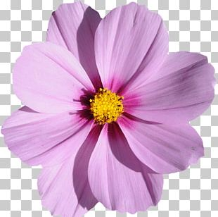 Grandma's Purple Flowers Photography PNG