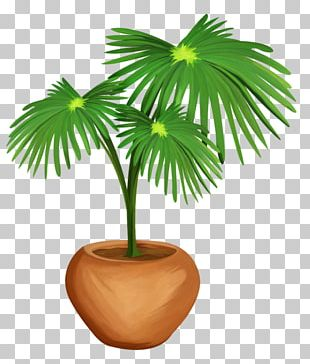 Arecaceae Asian Palmyra Palm Woody Plant Tree PNG
