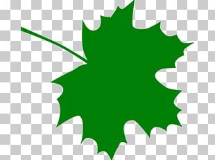 Sugar Maple Maple Leaf PNG