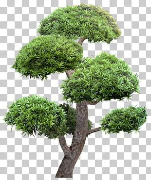 Garden Landscape Tree PNG
