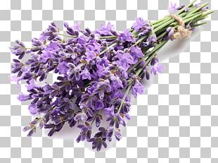 English Lavender Extract Lavender Oil Essential Oil PNG