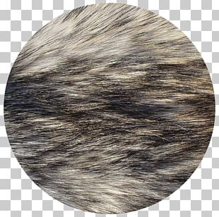 Dog Fur Texture Mapping Arctic Fox PNG