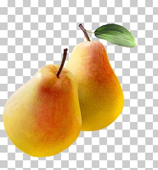 Bosc Pear Williams Pear Asian Pear Crisp Clapps Favourite PNG