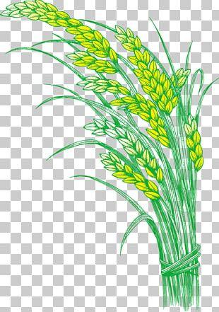 Rice Oryza Sativa Five Grains PNG