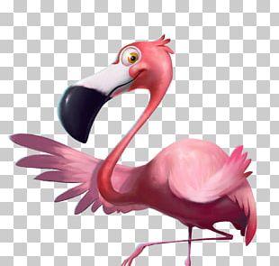 Flamingo Bird Cartoon PNG