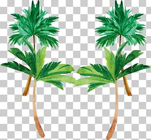 Tree Coconut Watercolor Painting Plant PNG