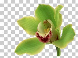 Orchids Flower Bouquet Desktop Green PNG
