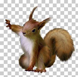 Squirrel Scrat Rodent PNG