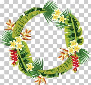 Leaf Palm Branch Arecaceae PNG