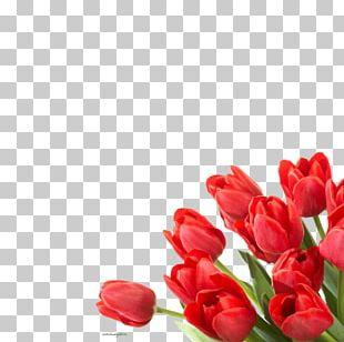 Flower Tulip Desktop Floristry PNG