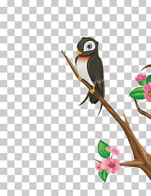 Bird Cherry Blossom Photography Illustration PNG