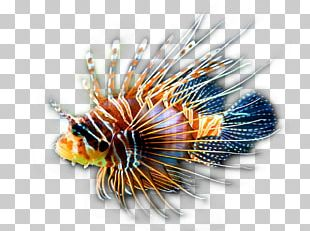 Red Lionfish Clownfish Coral Reef Tropical Fish PNG