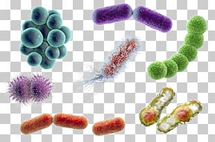 Stock Photography Bacteria Microorganism Coccus E. Coli PNG