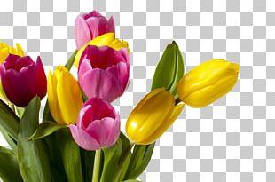 Tulip Flower Color Orange Wedding PNG