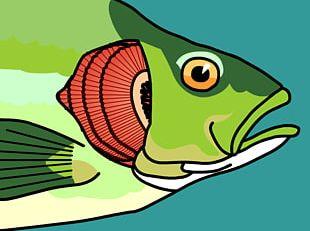 Fish Gill PNG