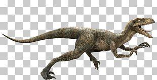 Jurassic Park Velociraptor Deinonychus Late Cretaceous Dinosaur PNG