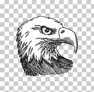 Bald Eagle Drawing Graphics Illustration PNG